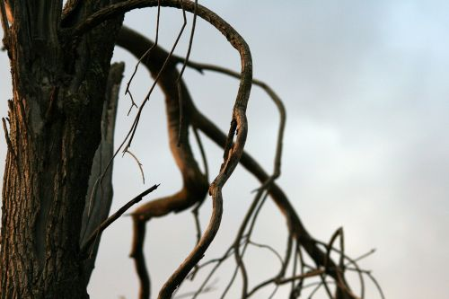 Close Up Of Dry Twig
