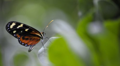 Close Up Of Monarch Butterfly