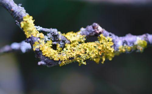 closeup tree lichen
