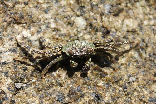 closeup  animal  tropical