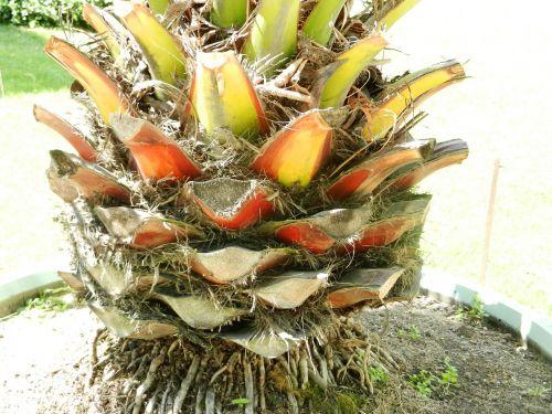closeup plant rhizome