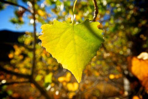 Closeup Of Green Leaf