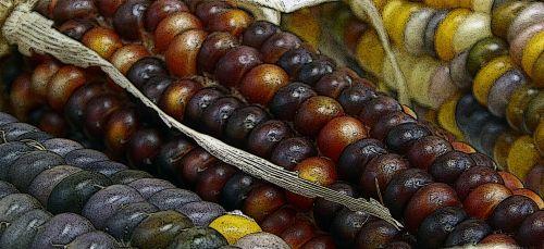 Closeup Of Indian Corn Background