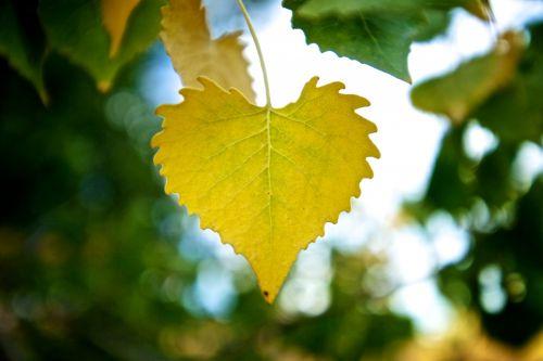 Closeup Of Yellow Leaf