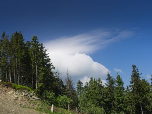 cloud mountains forest