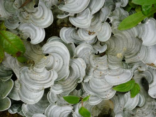 Cloud Forest Fungi