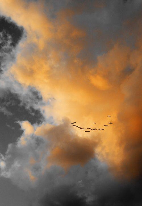 clouds birds sky