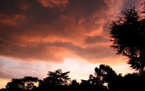 clouds,low,stormy,glowing,light,pechy-pink,blushing,trees,sky