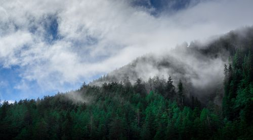 clouds conifers fir trees