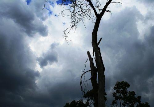 debesys,rinkimas,sutapimas,audra,tamsi,šviesos pleistrai,mėlynas dangus,medžio kamienas,pranešimas