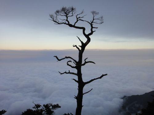clouds giant tree sam rainsy