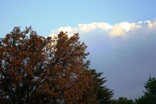 clouds cumulus white