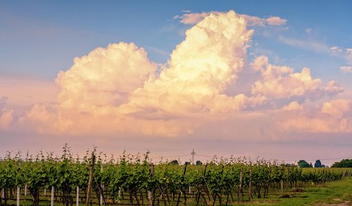clouds  sky  wine