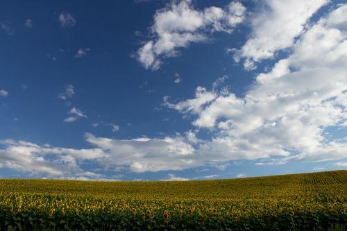 clouds sky field