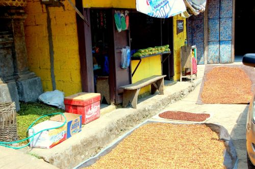 clove drying bali