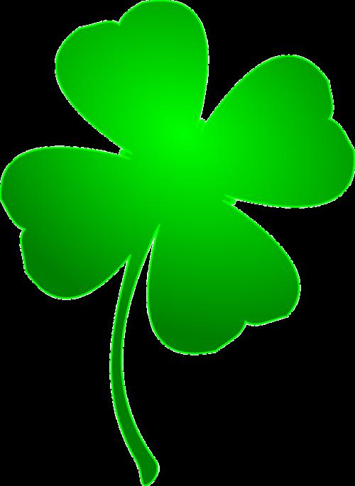 clover four-leaf clover grass