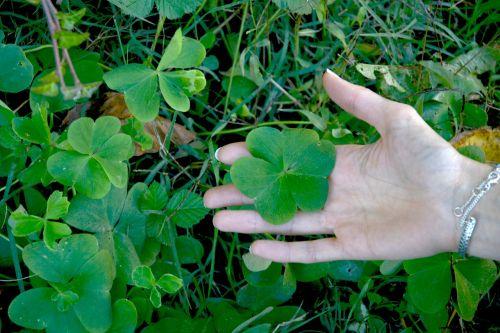 dobilas,ranka,žolė