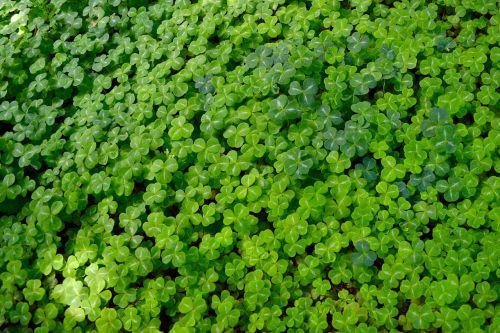 clover good luck background