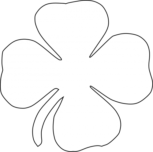 clover four-leaf clover luck