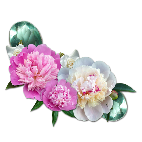 cluster peony roses