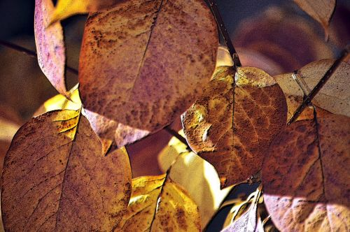 Cluster Of Autumn Leaves