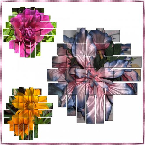 Flower Clusters # 1