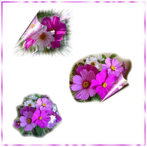 Flower Clusters # 2