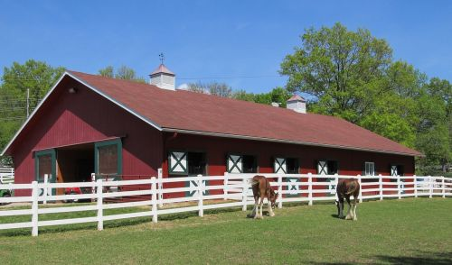 clydesdales corral horses