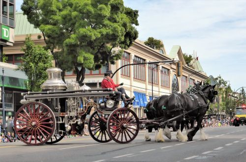 coach horse and carriage antique car