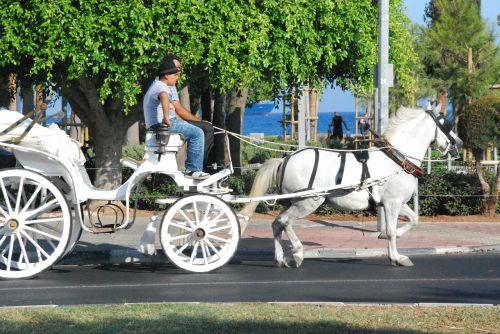 coach horse coachman