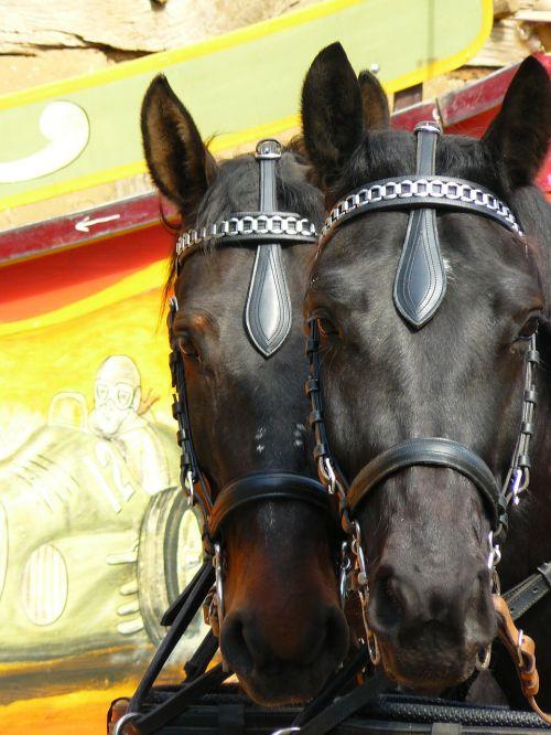 coach horses horses animals