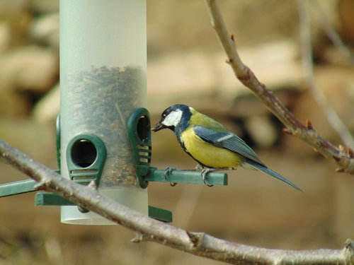 coal tit  bird feeder  bird
