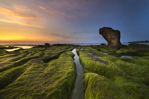 coast  moss  province