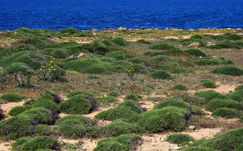 coast  vegetation  nature