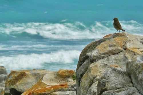 coast rocky coast sea