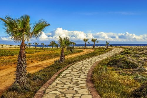 coastal path palm trees sea