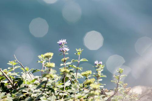 coastal plants purple bokeh