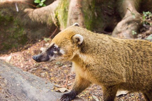 coati  park  ecological