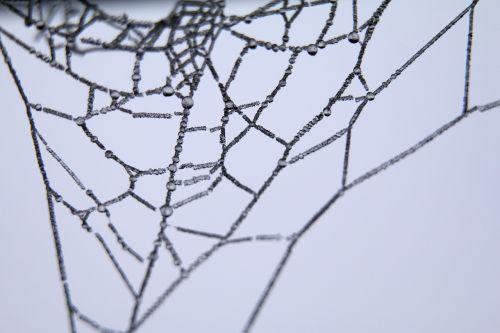 cob spider web