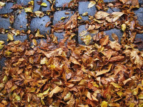 cobbled leaves slippery