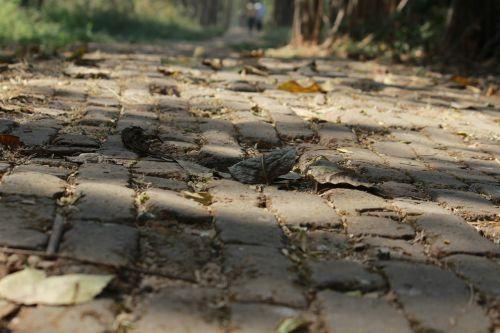 cobblestones garden pathway