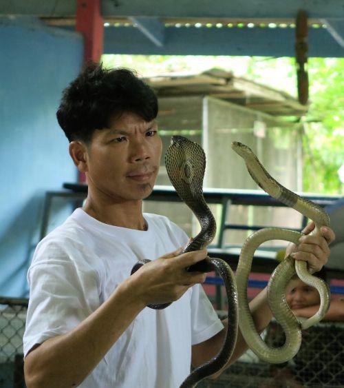 cobra trainer snakes