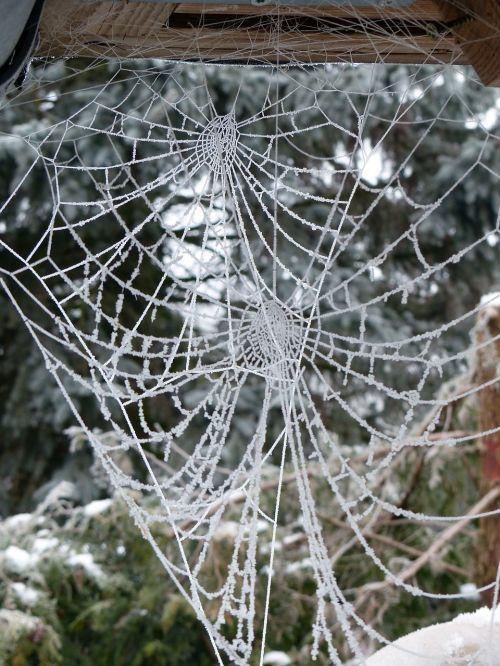 cobweb hoarfrost frost