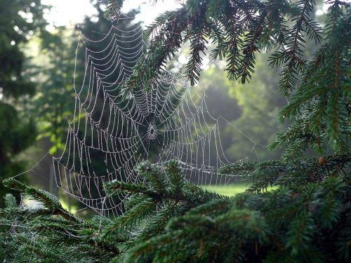 cobweb network spider