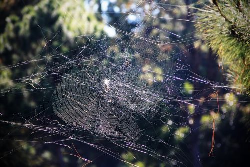 cobweb threads stretched