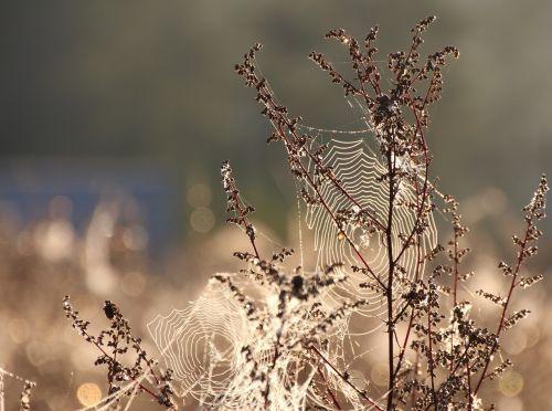 cobweb dew moist
