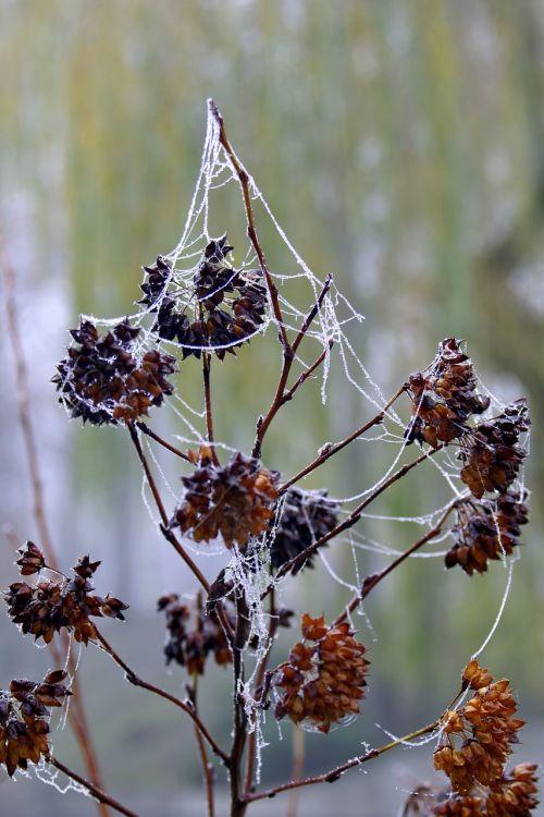 cobweb ice not cold
