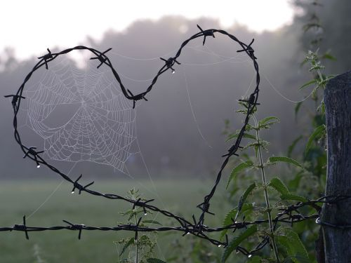 cobweb heart love
