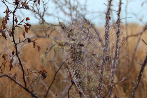 cobweb autumn dew