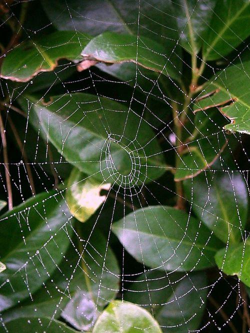 cobweb network networking